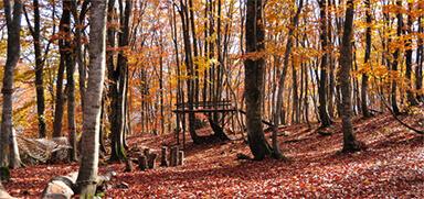 白馬岩岳マウンテンリゾート ブナの森パーク